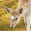 starlightstudios's avatar