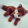 StarMoonShadows's avatar