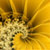 starsunflowerstudio's avatar