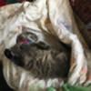 starwolf112214's avatar