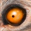 Steamonic's avatar