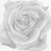 stefcha's avatar