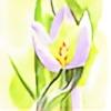 stefonthesea's avatar