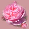 sternenglanz98's avatar