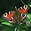 stevepl's avatar
