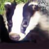Stinking-Badger's avatar