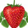 Stirfried-Strawberry's avatar