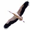 stockkj's avatar