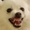 stopthatrightnow's avatar