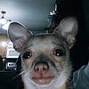 StpdIdiot's avatar
