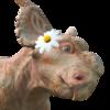 StrangeAddict's avatar