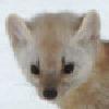strato-catster's avatar