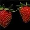 strawberry-field's avatar