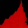 stren's avatar