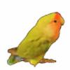 studio-emi's avatar