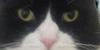 StunninglySurreal's avatar