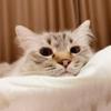 summernatsumi's avatar