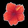 Sumooli's avatar