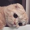 sun-cat-sun's avatar
