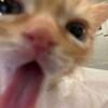 SunCream's avatar