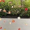 SunnyThePokemon's avatar
