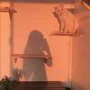 sunshinearts1009's avatar