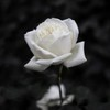 superblitz3612's avatar