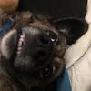 SupremePupper's avatar