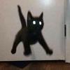SusieSunflower's avatar