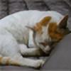 susumu-Express's avatar