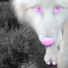 susy1493's avatar