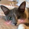 swagfox89659's avatar