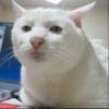 Sweetgirl193's avatar
