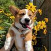 SweetPuppyTalk's avatar