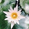 SwordTiger8888's avatar