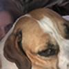 Sydneydrawsdoggos's avatar