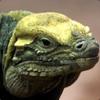 SylvesterTemple's avatar