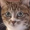 SylviaYang's avatar