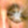 Synthor's avatar