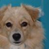 Syraeth's avatar