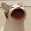 tableesto's avatar