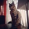 taisuho's avatar