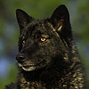 Takkia's avatar
