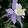 talent-dead's avatar