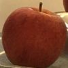 tamamatt's avatar