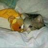 tamarash's avatar