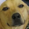 tangerinnnnna's avatar