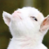 TangoFox's avatar