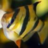 Tanker-man's avatar