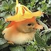 Taozo's avatar